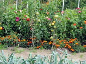 Jardin sans pesticide