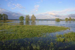 Prairies du val de Saône
