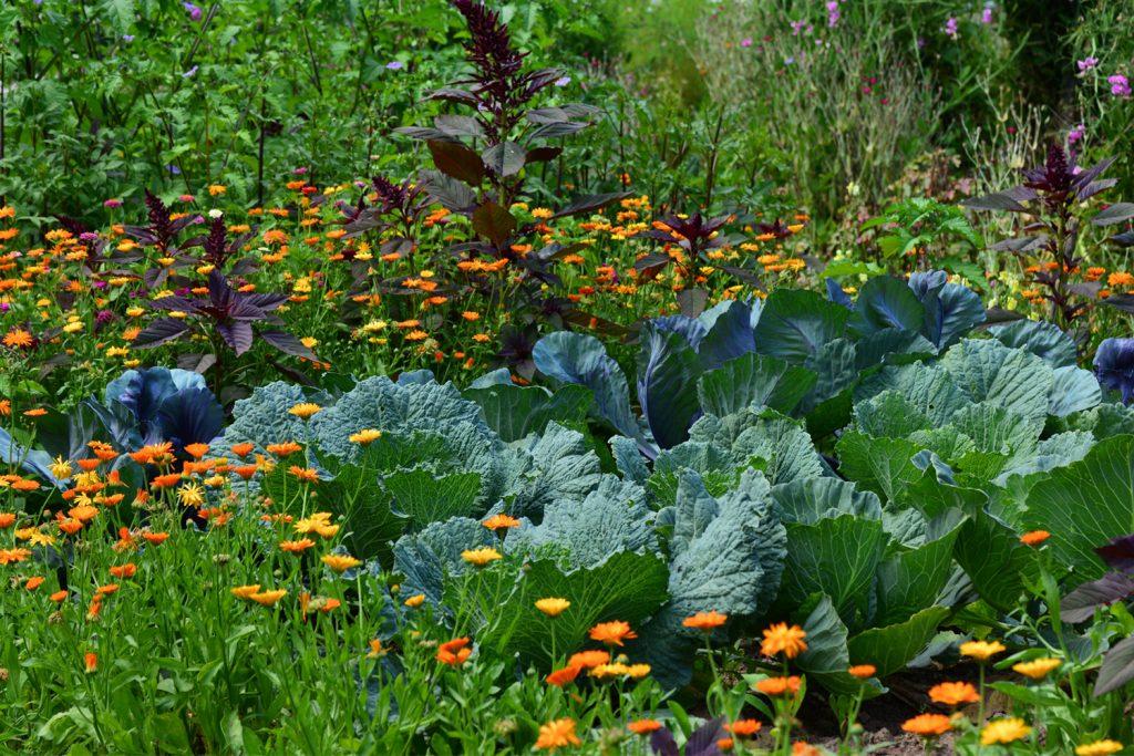 Jardiner sans pesticides_Loi Abbé