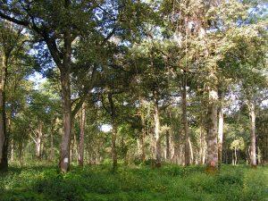 Bois de Maillance