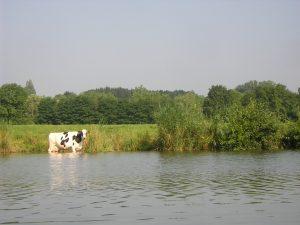Agriculture sur la Seille