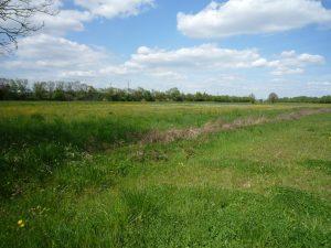 Reconversion prairies