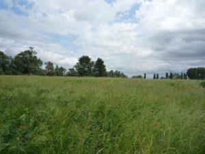 Prairie de fauche - S. HORENT