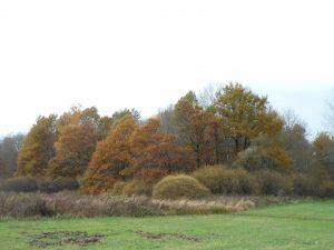 Vallée de la Lanterne à Faverney