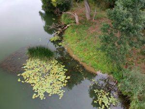 Ile Boileau à Seurre