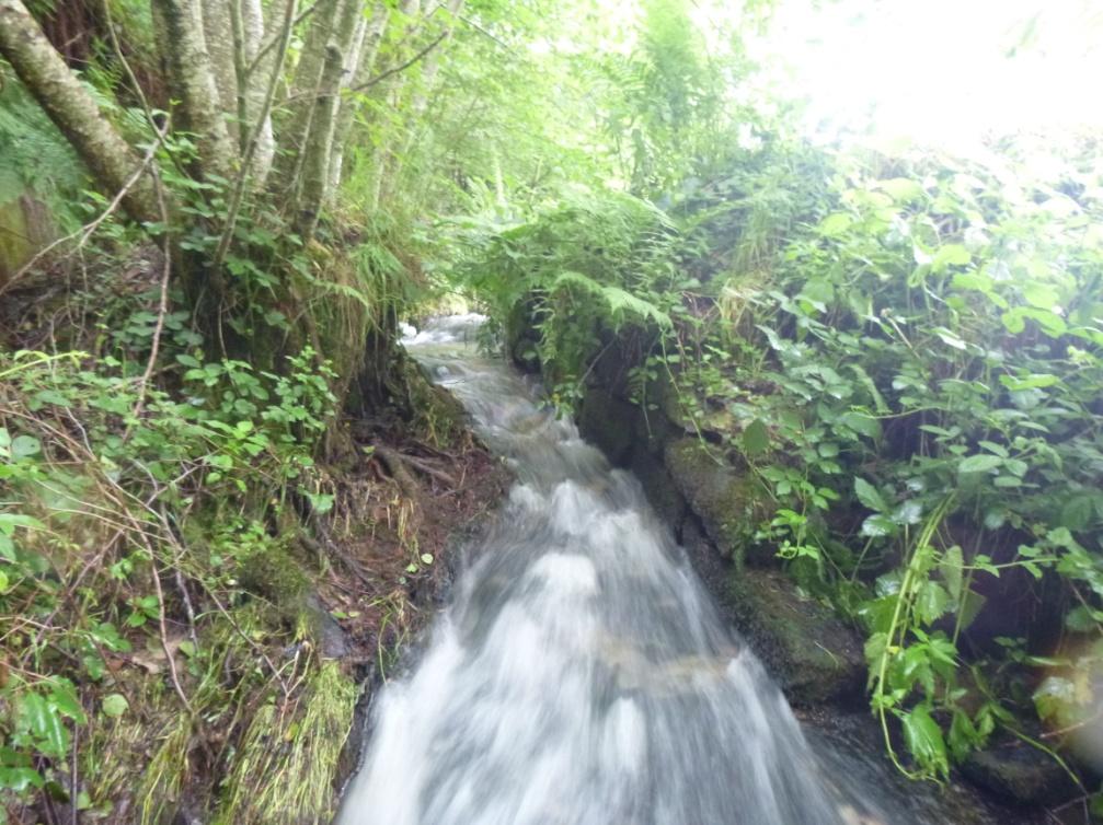 Cascade Viomenil