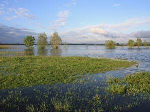 Les prairies inondables du Val de Saône